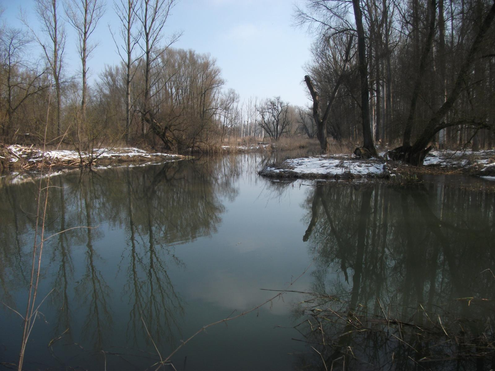 img_donau-und-altwasser (15)