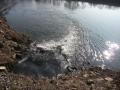 img_donau-und-altwasser (10)