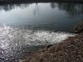 img_donau-und-altwasser (12)