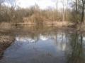 img_donau-und-altwasser (23)
