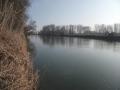 img_donau-und-altwasser (3)