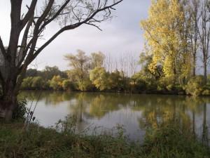 Donau + Altwasser